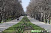Намаляват глобата за разходка в парка