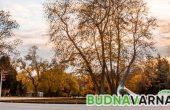 Времето с BudnaVarna.bg - 18 декември 2017