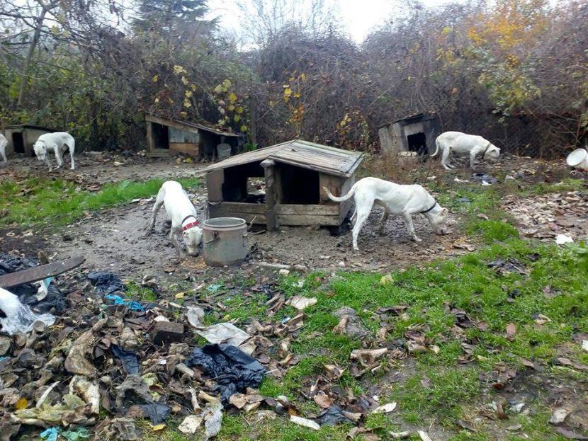 150 лева глоба за притежателя на нелегален развъдник за кучета