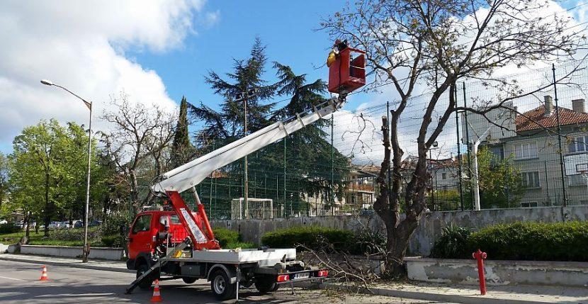 """Жители на """"Възраждане"""" чакат за подкастряне на дърветата пред блока"""