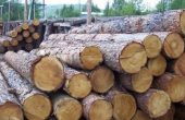 Цените за кубик дърва във Варна варират от 70 до 95 лева