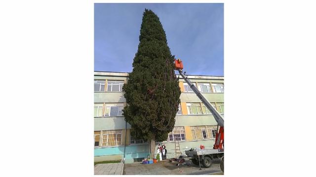 Голямо коледно дърво грейва в двора на училище Любен Каравелов
