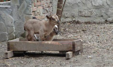 Коледни бебета във варненския зоопарк