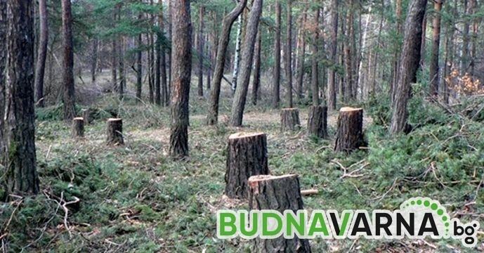 Варненци спасиха 575 дървета от изсичане