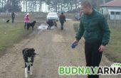 Глобиха семейство за разходка с кучетата им в парк