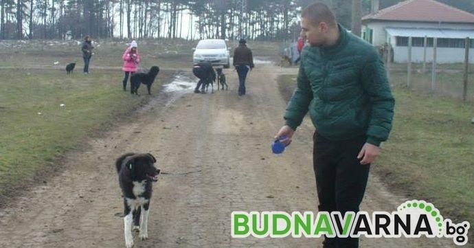 Доброволци от Варна разхождат кучетата от приюта