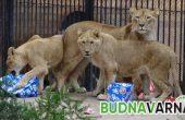 Зоопаркът празнува Свети Валентин