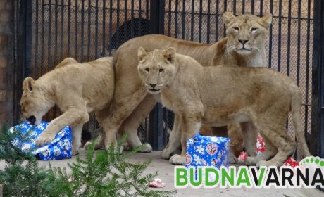 Зоопаркът във Варна отваря за посетители на 13-ти май