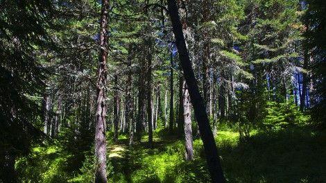 Как стотици хиляди дървета се появили край Варна преди 90 години