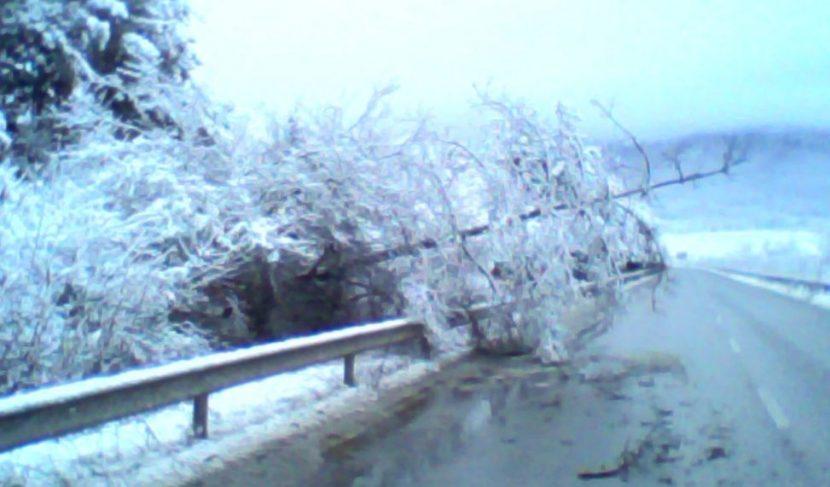 Читател на Будна Варна: паднало дърво след Аксаково по пътя за Добрич