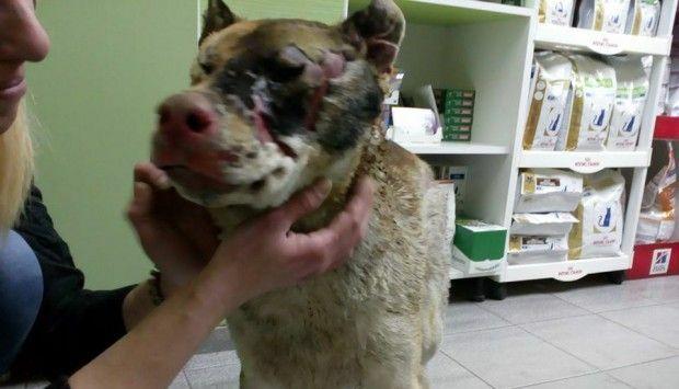 Нечовешко! Да запалиш живи кучета във Варна