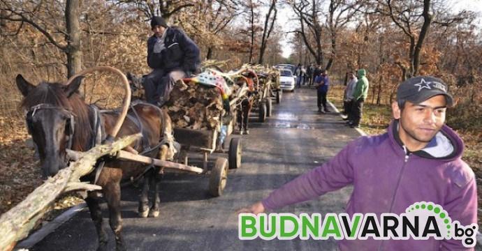 Задържаха каруца с незаконно добити дърва в горски масив край Варна