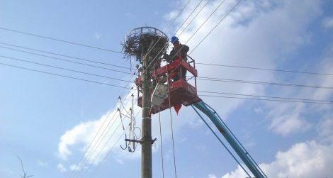 Платформи за щъркелови гнезда по електроразпределителни съоръжения са поставени в област Варна