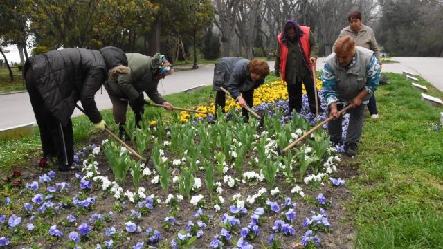 Освежават цветните лехи в Морската градина
