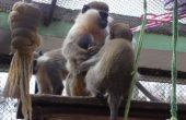 Маймунка се роди във варненския зоопарк
