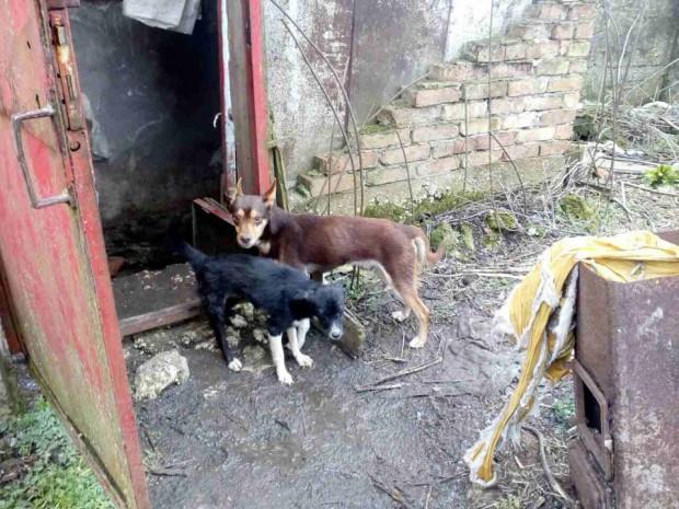 Нов концлагер за кучета край Варна