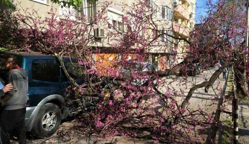 Паднали клони затвориха улица (снимки)