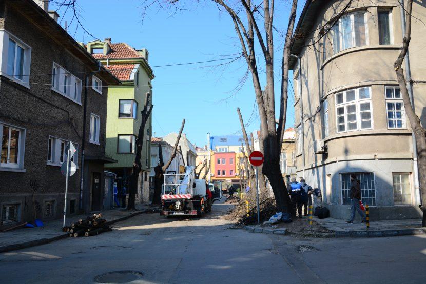 Общината обясни защо се прави резитбата на дървета