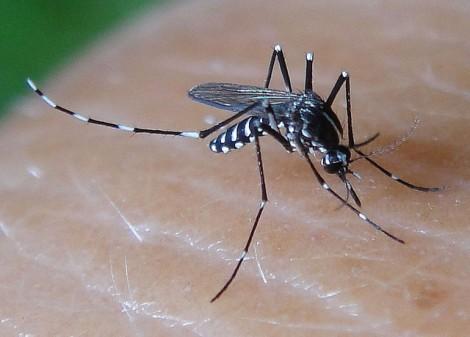 Варненец алармира за тигрови комари в Цветния квартал