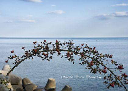 """""""Сбогуване с лято"""" от Мариела Русева"""