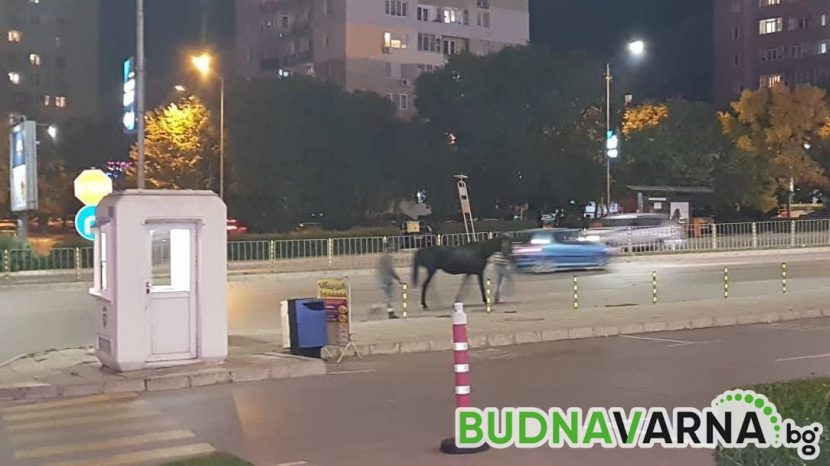 """Изтърваха коня отново до """"Varna Mall"""" (видео)"""