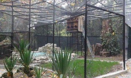 Черните лебеди с нова клетка в Зоокът-Варна