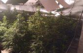 Криминалисти разкриха две високотехнологични наркооранжерии край Варна (видео)