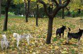 Бездомни кучета плашат варненци в морската градина