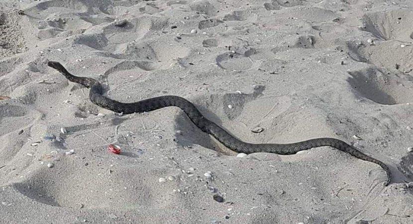 Змия стресна хората на варненски плаж (снимки)