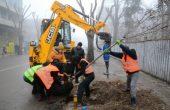 324 декоративни дървета са засадени през есента във Варна