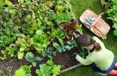 Учат малки деца във Варна как се садят зеленчуци и отглеждат животни