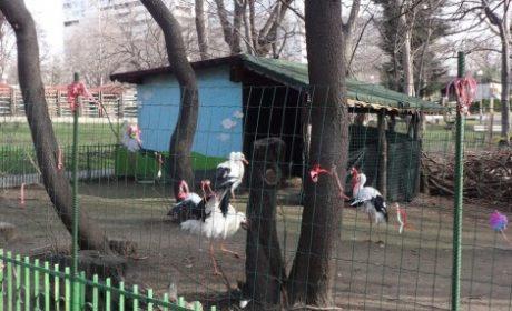 Варненци завързаха хиляди мартеници на оградата на щъркелите в Зоопарка