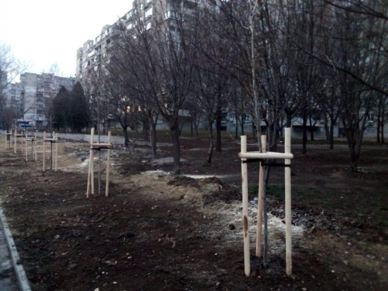 """Засадиха дървета по бул. """"Левски"""""""