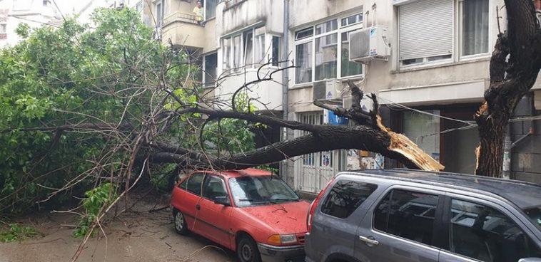 Дърво се разцепи и падна върху коли (снимки)