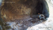 Две египетски лешоядчета се излюпиха пред камера за онлайн наблюдение край Варна