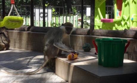 Разхлаждат животните във варненския зоопарк с ледени плодове