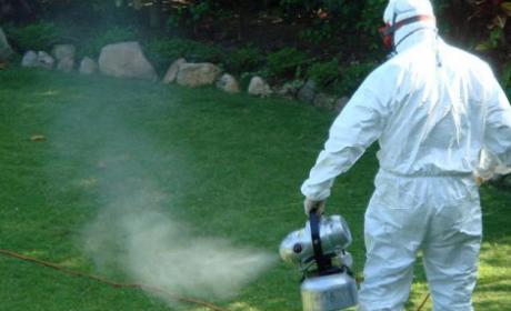 Стотици сигнали от граждани за напаст от кърлежи, комари и бълхи Варна