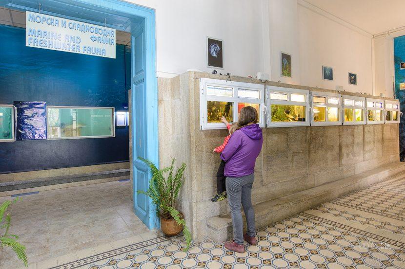 Намалени билети и вход безплатен на празника на Аквариума във Варна