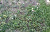 Как изглежда розариумът в Морската градина (снимки)