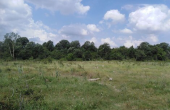 НАП продава земеделски земи във Варненско