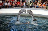 Граждани готвят протест пред варненския делфинариум с искане да бъде затворен