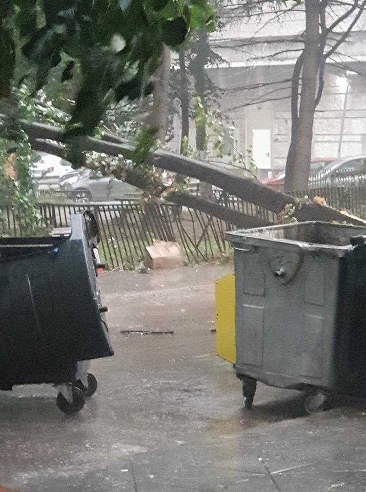 Дърво падна в центъра на Варна