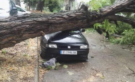 Над 200 сигнала за паднали дървета във Варна