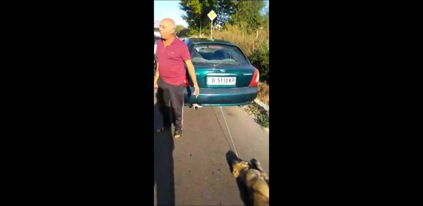 Поредна жестокост към куче във варненско (видео)