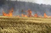 Стотици тонове зърно изгоряха при пожар край Варна
