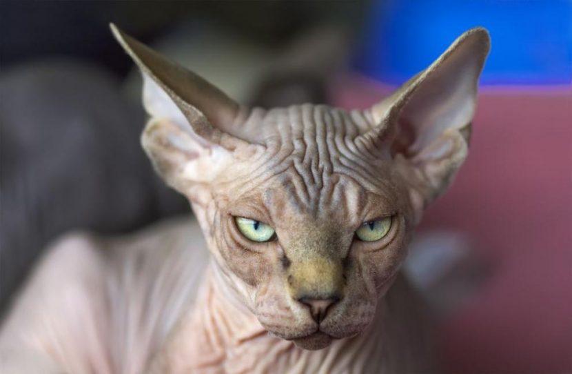 Надзиратели хванаха котка, пренасяла мобилни телефони за затворници