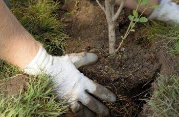 Доброволци ще освежават варненския зоопарк, садят и дръвчета