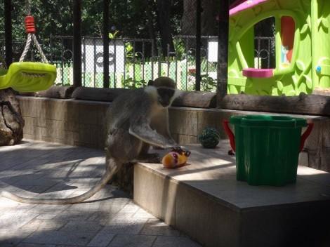 Зоопаркът във Варна ще раздаде тикви на животните за Хелоуин