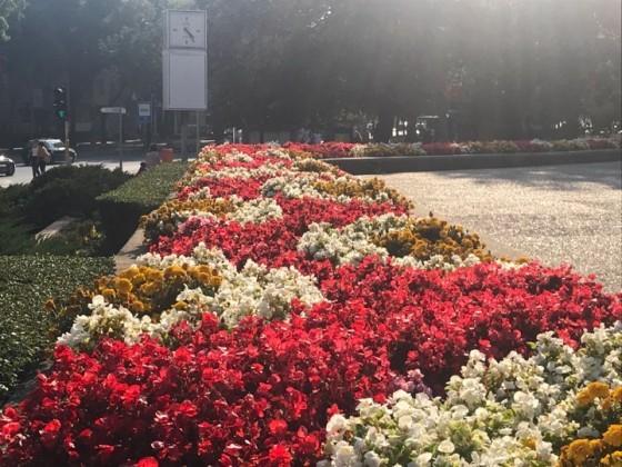Подменят цветната феерия във Варна с есенни растения