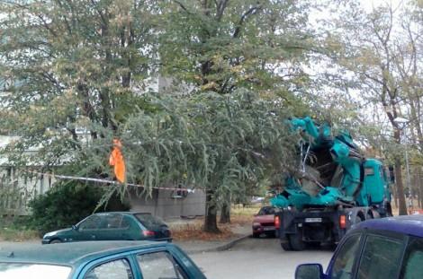 Спасяват 23 дървета от отсичане със специална машина във Варна